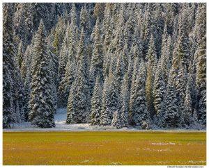 Tucquala Lake, Winter Trees and Wetland, Cle Elum, Washington State