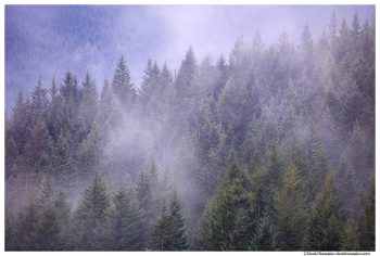 Evening Storm, Capitol State Forest, Washington State