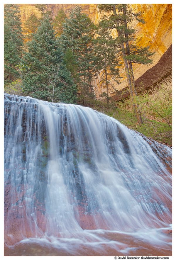 Waterfall and North Creek Canyon Trees, The Subway, Zion National Park