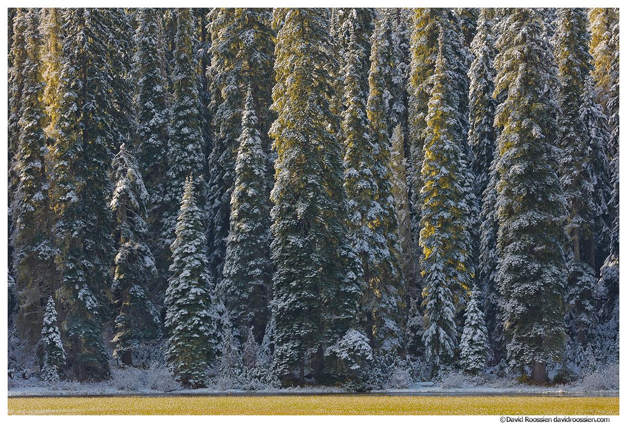 Backlit Tucquala Lake Trees, Cle Elum, Washington