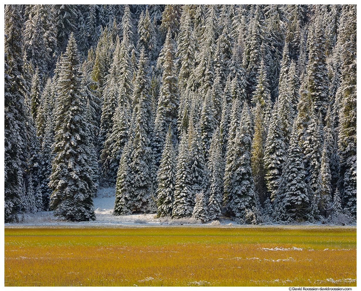 Wetlands and Tucquala Lake Trees, Cle Elum, Washington