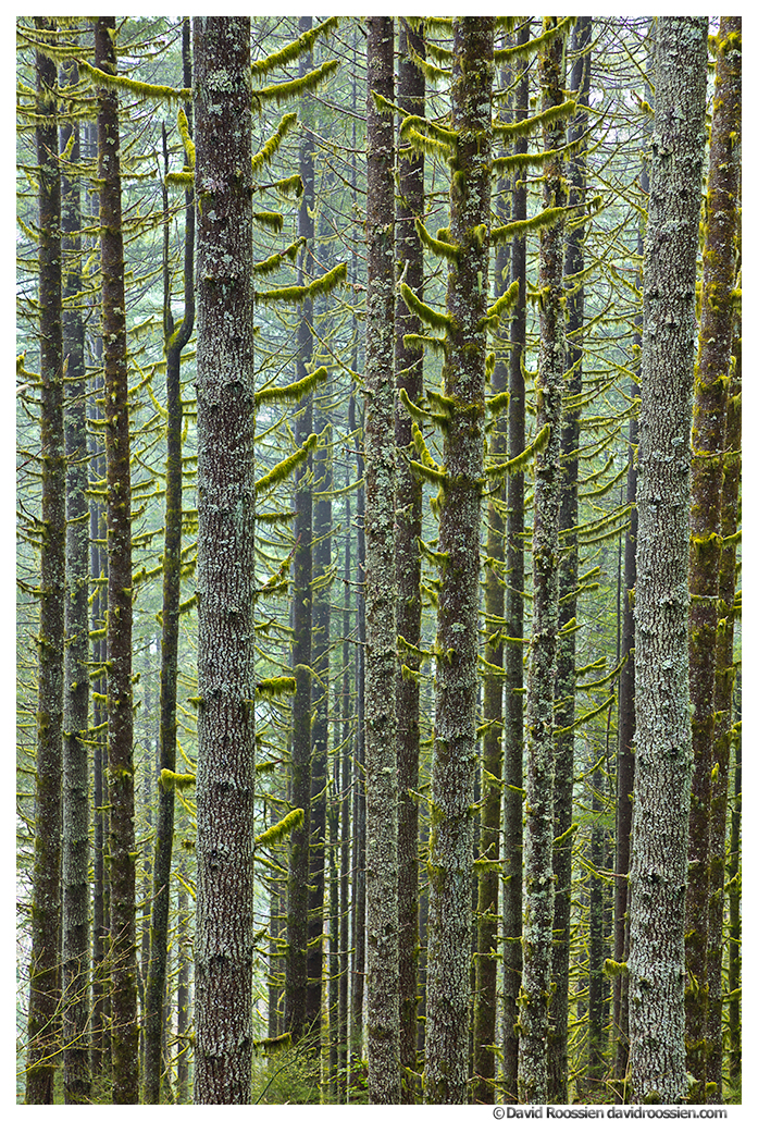 Density, Capitol State Forest, Washington State